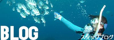 ダイビングショップBLUEBLUE明石のダイビングスタッフブログ